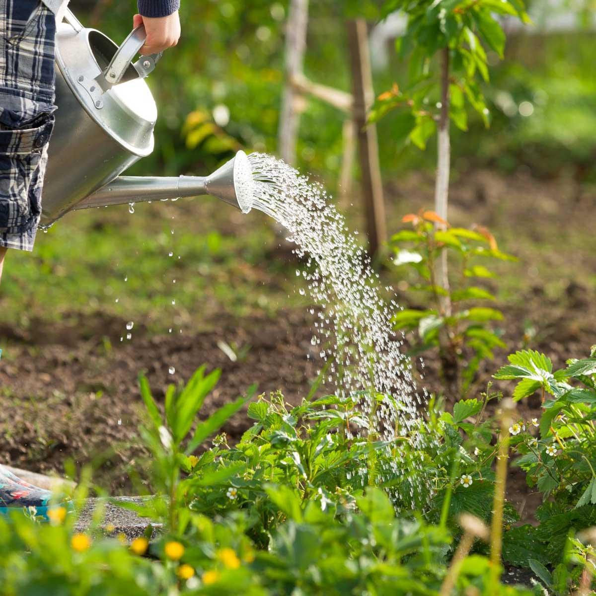 Comment Detruire Efficacement Les Taupes traitement anti vers blancs jardin | jardins-animes
