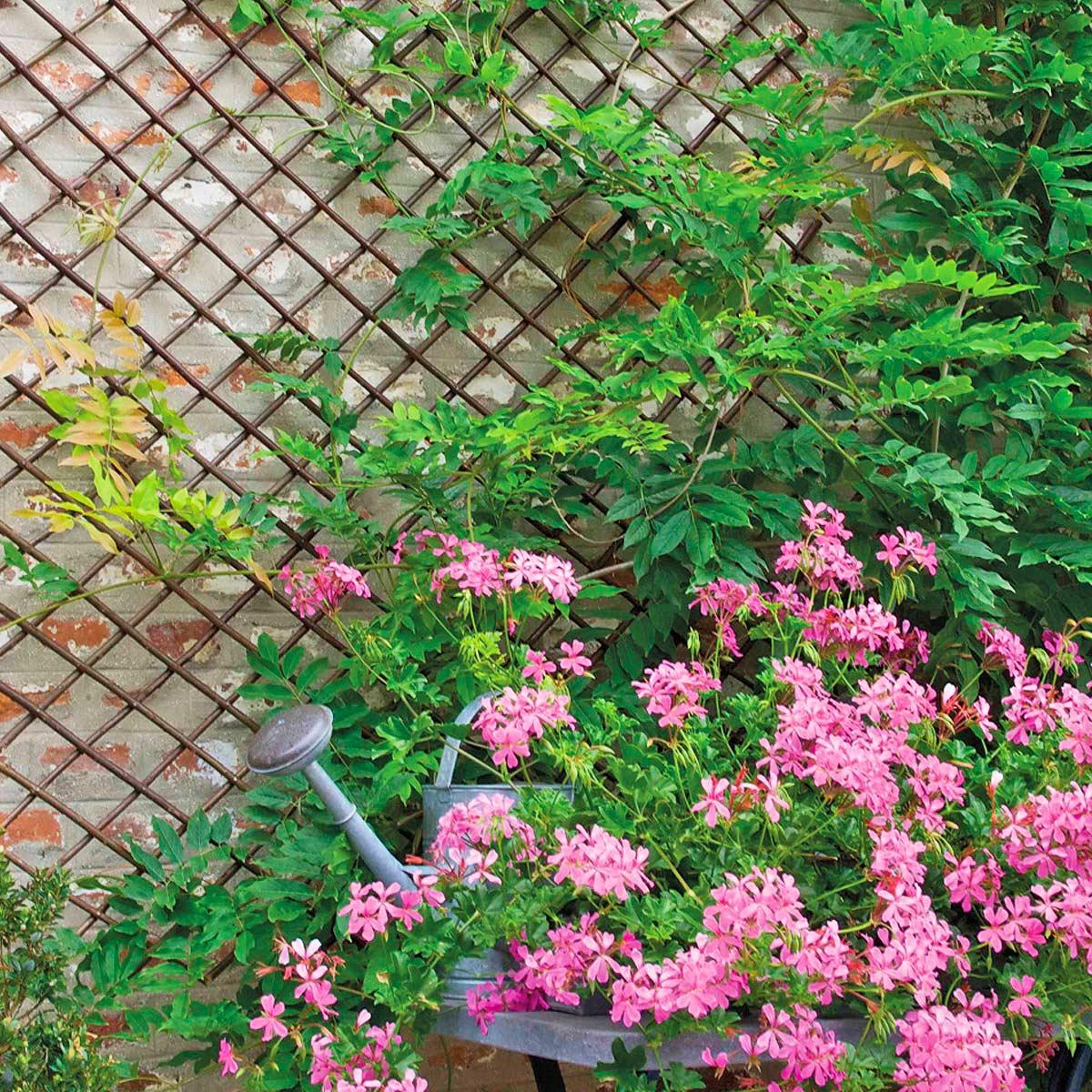 Claustra Treillis Exterieur Bois treillis bois et treillage métal pour plante grimpante