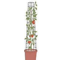 tomate achat vente de tomate pas cher. Black Bedroom Furniture Sets. Home Design Ideas